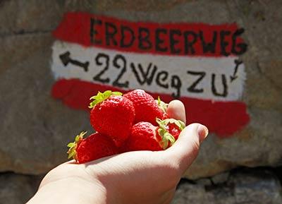 Erdbeerweg Südtirol