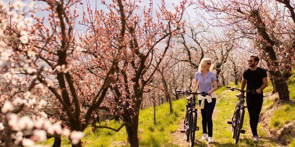 E-Bike Blooming Days